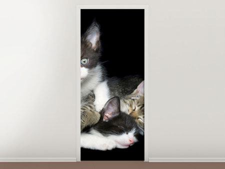 Door Mural Cat Quartet