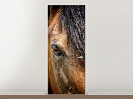 Door Mural Thoroughbred Stallion