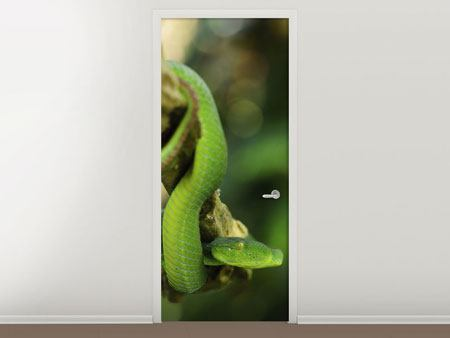 Door Mural Green Tree Python