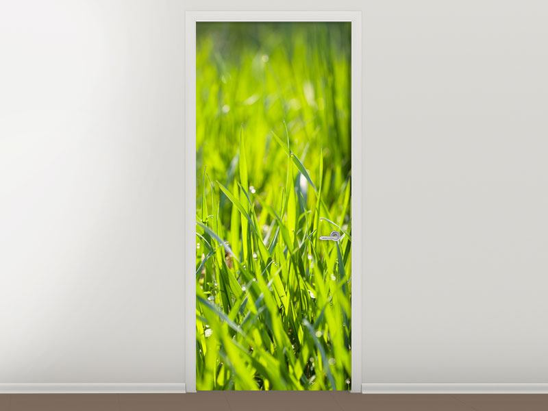 Door Mural Bright Grass In Morning Dew