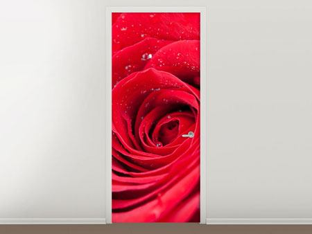 Door Mural Red Rose In Morning Dew