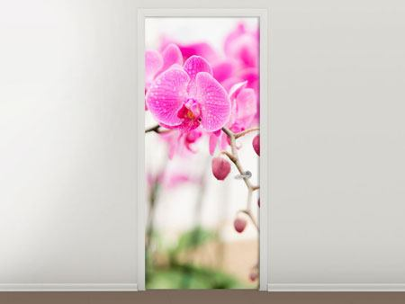 Door Mural Striped Orchid Flowers In Pink