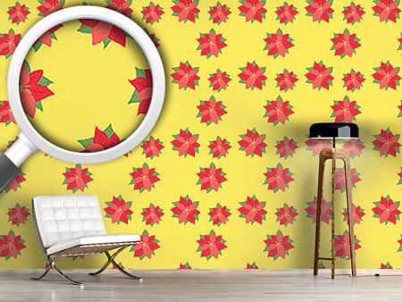 Design Wallpaper Poinsettia In Bloom