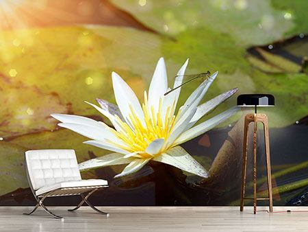 Photo Wallpaper Waterlily