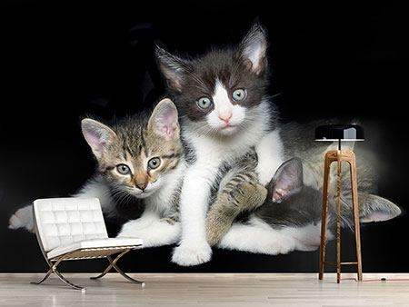 Photo Wallpaper Cat Quartet