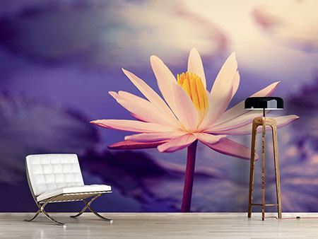 Photo Wallpaper Lotus At Sunset