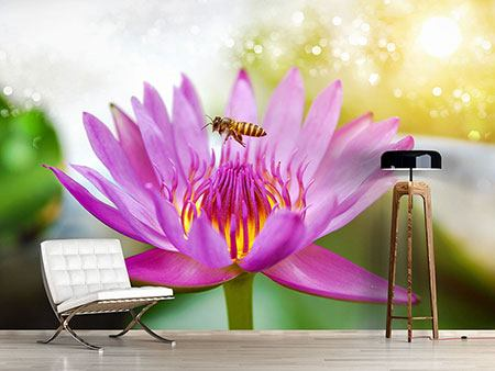 Photo Wallpaper The Lotus With Bee