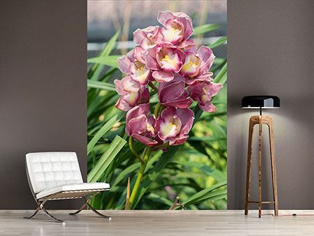 Photo Wallpaper Wild Orchids