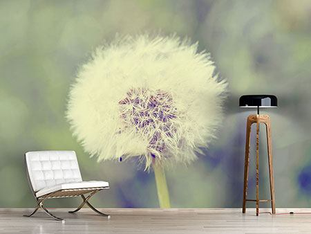 Photo Wallpaper The Dandelion