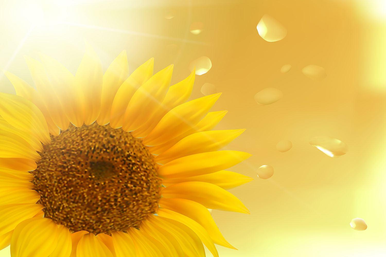 Fototapete Sonnenblume im Morgentau