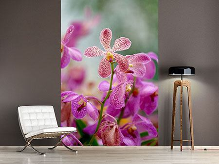 Photo Wallpaper Orchid Dots