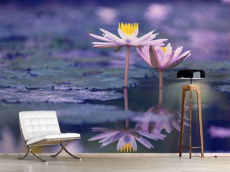 Photo Wallpaper Lotus Duo In Sunrise