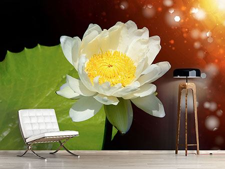 Photo Wallpaper Water Lily In The Moonlight
