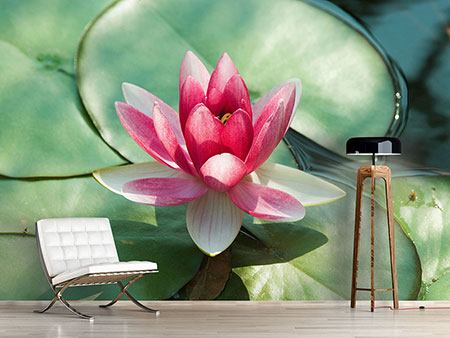 Photo Wallpaper The Frog And The Lotus Leaf