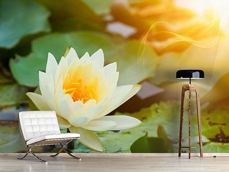 Photo Wallpaper Romantic Waterlily