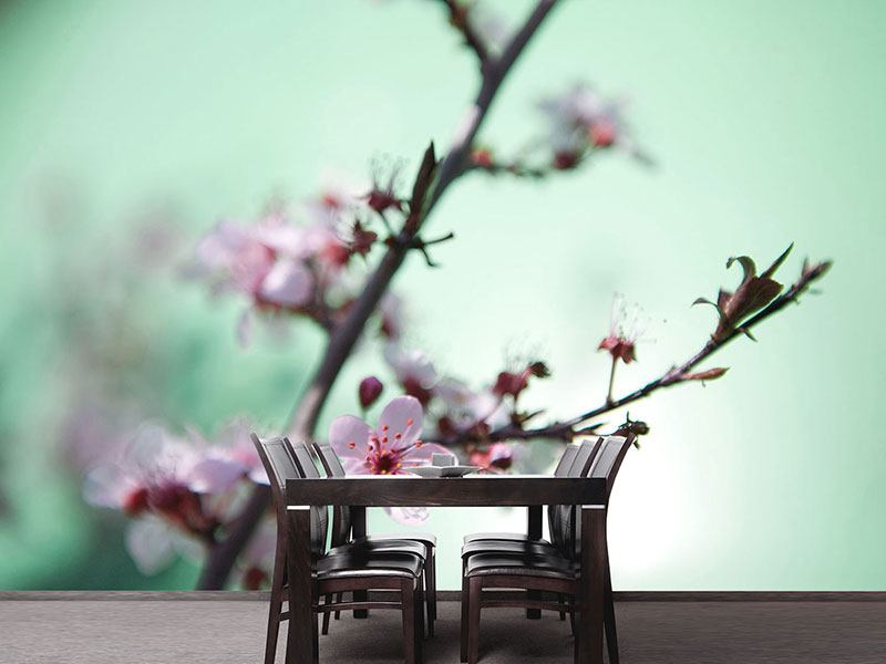 Photo Wallpaper Beautiful Japanese Cherry Blossom