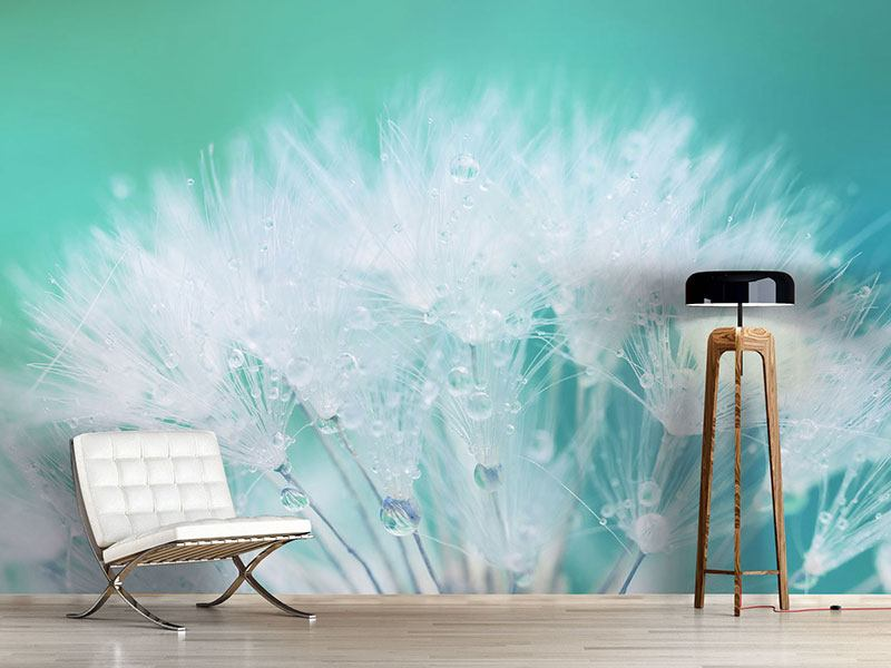 Fototapete Close Up Löwenzahn im Morgentau