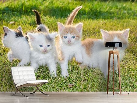 Photo Wallpaper Kittens