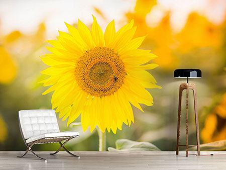 Photo Wallpaper Bright Sunflower
