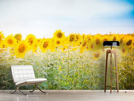 Photo Wallpaper In the Sunflower Field