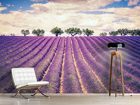 Photo Wallpaper The Lavender Field