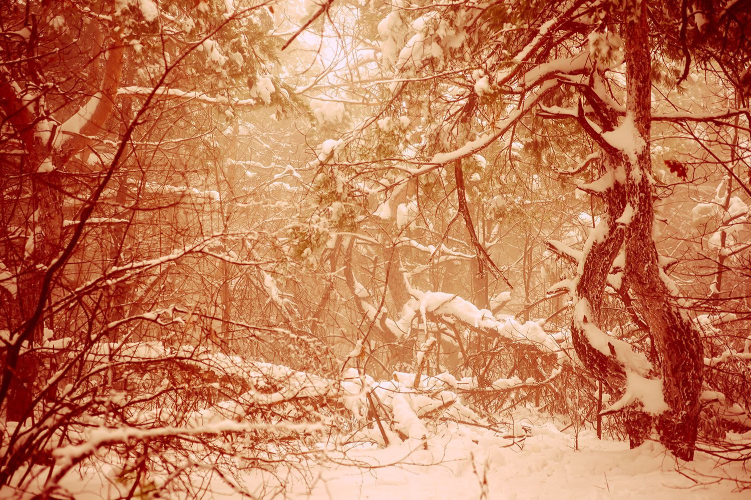 Photo Wallpaper Snow Forest