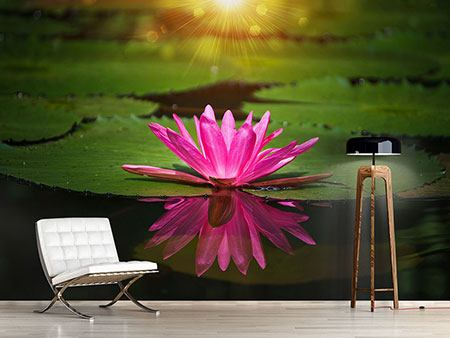 Photo Wallpaper Lily Reflection