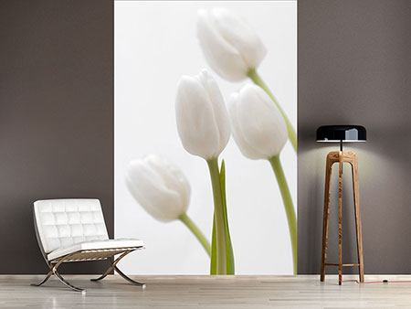 Photo Wallpaper White Tulips