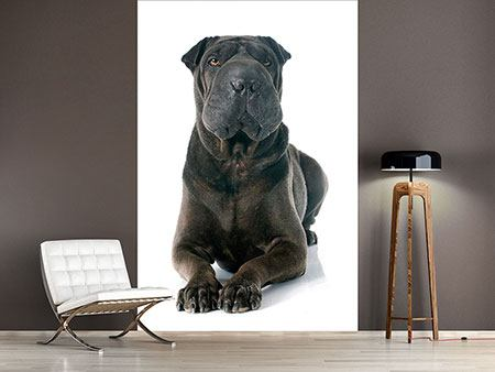 Photo Wallpaper The Mastiff