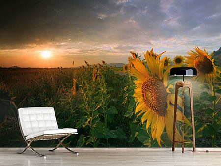 Photo Wallpaper Sunflowers In Play Of Light
