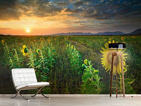 Photo Wallpaper Sunflower Field At Sunset