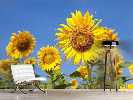 Photo Wallpaper Heavenly Sunflower