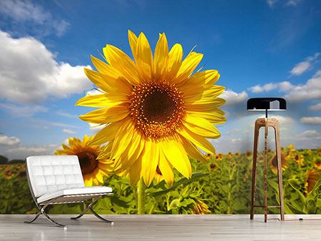 Photo Wallpaper Field Of Sunflowers