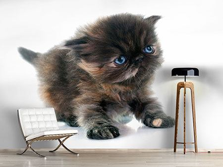 Photo Wallpaper Persian Kitten