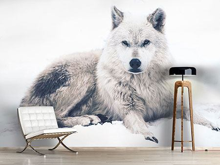 Photo Wallpaper The Wolf