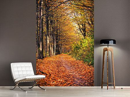 Photo Wallpaper Deciduous Forest In Autumn Light