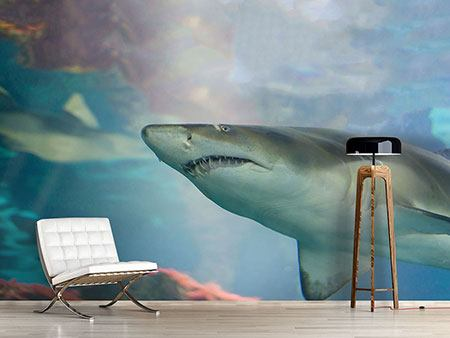 Photo Wallpaper Shark