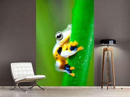 Photo Wallpaper The Frog
