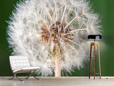 Photo Wallpaper Giant Dandelion