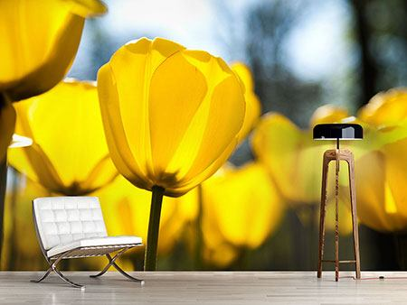 Photo Wallpaper Yellow Tulips In XXL