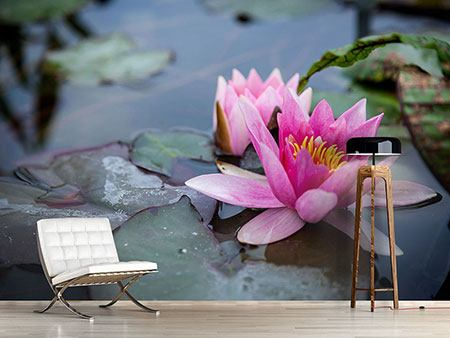 Photo Wallpaper The Waterlilies Duo