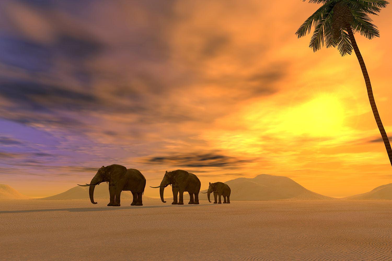 Fototapete Wüstenelefanten