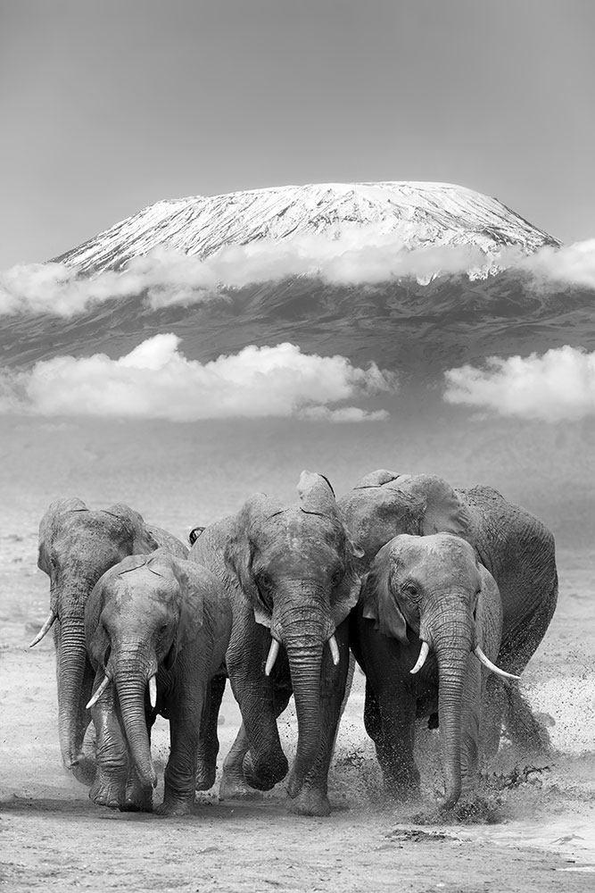 Fototapete Elefantenherde
