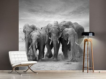 Photo Wallpaper The Elephants