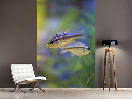 Photo Wallpaper Fish Couple