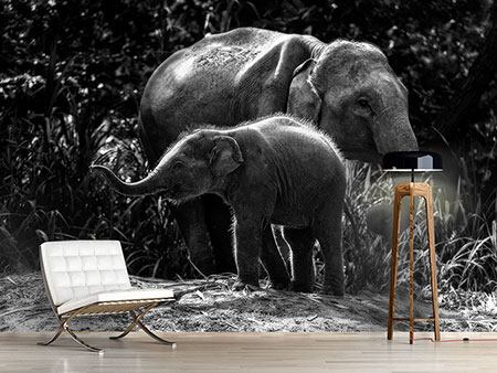 Photo Wallpaper Pachyderm