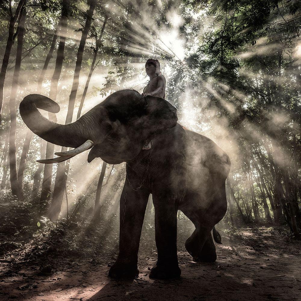 Fototapete Der Elefant