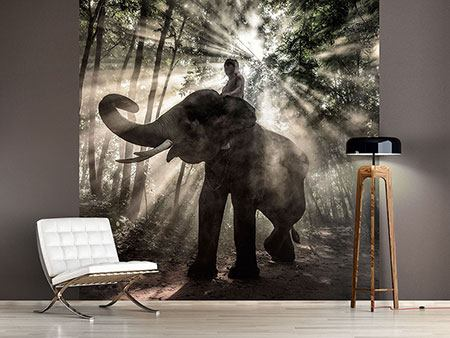 Photo Wallpaper The Elephant