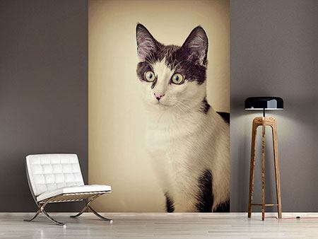 Photo Wallpaper Cat