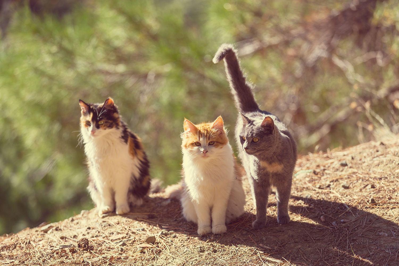 Fototapete Katzen im Garten